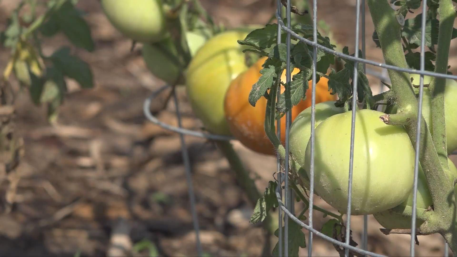 Consejos de jardinería Para Esta Época Del Año - KEYC 1